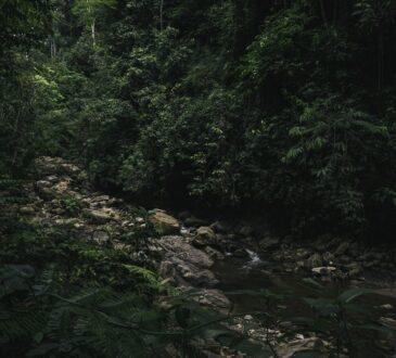 Une forêt primaire